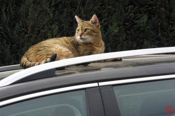 TM - Lästi auf Auto