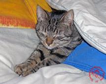 Katze_Decken_Ehrhardt_TB