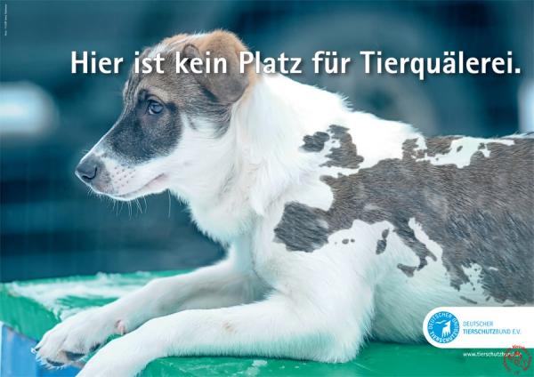 Europafell_Hund_gross