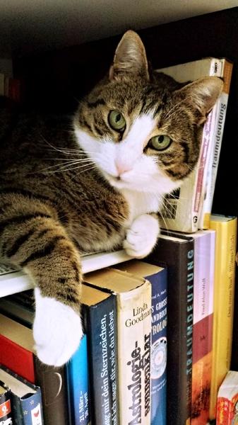 cat-718936