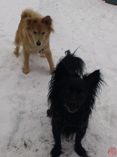 Amy & Bruno