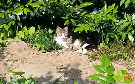 Katze_Schatten