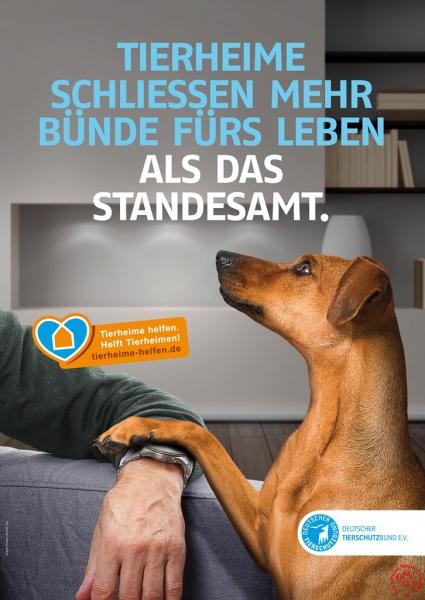 Tierheime helfen_Hund