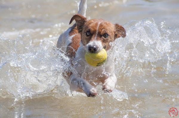 dog-wasser