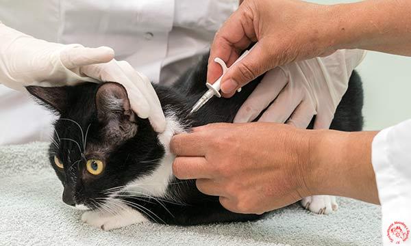 Katze-beim-Chippen-Tierarzt